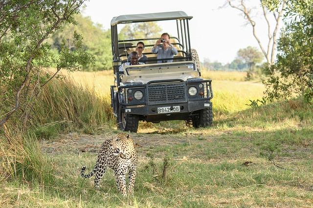 【南アフリカ/旅行】Must see サバンナのツアーin 南アフリカ