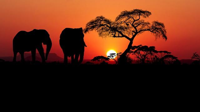 【南アフリカ/旅行】厳選、南アフリカの絶景ホテル