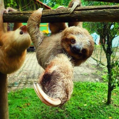 コスタリカで動物ボランティア|動物を守ろう