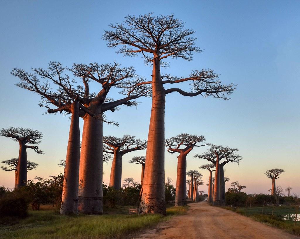 最後の楽園マダガスカル|旅行費用
