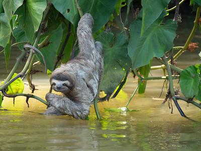 コスタリカのナマケモノ等、動物、旅行&ツアー