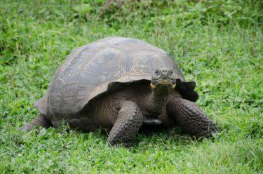 動物の楽園ガラパゴスの生き物